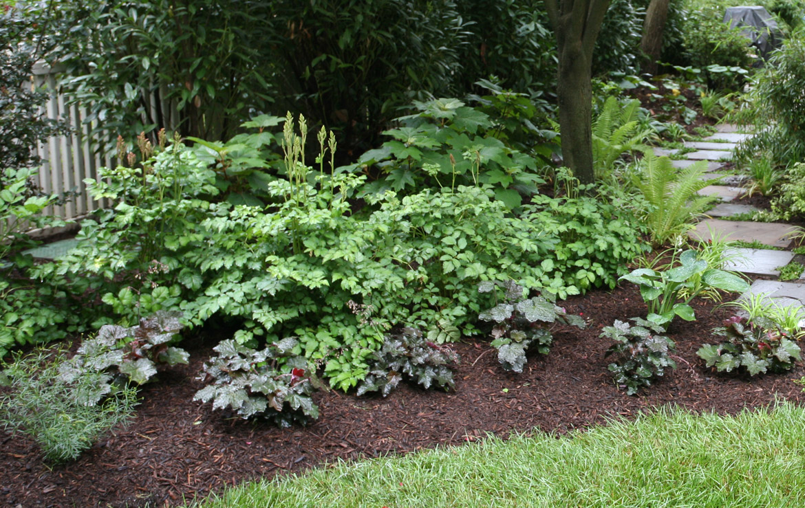 Newly planted shade garden.